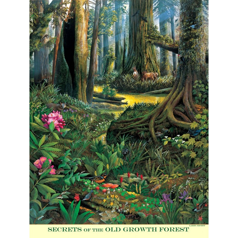 """Secrets Of The Old-growth Forest, 18"""" X 24"""" Poster"""