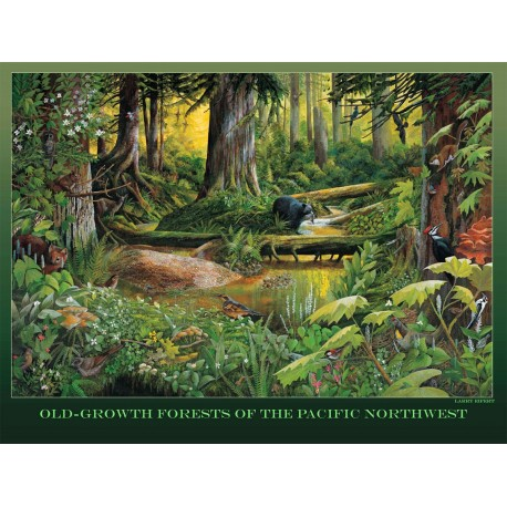 "Old-growth Forests of the PNW, 18"" x 24"" poster"