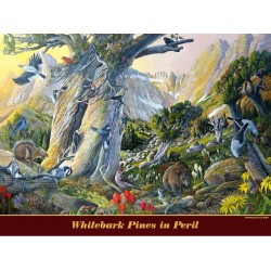 "Whitebark Pines in Peril, 18"" x 24"" poster"