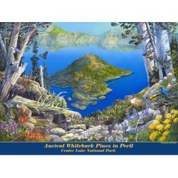 Whitebark Pines in Peril Crater Lake poster