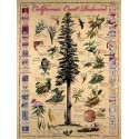 Events in the Life of a Coast Redwood Poster