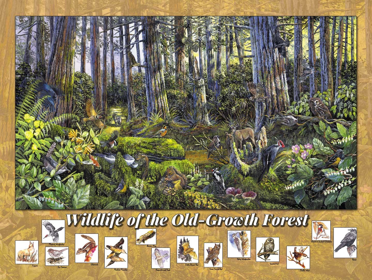 Wildlife of Old growth Forests